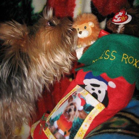 Opening Stocking - My Baby Opening Her Stocking Christmas Morning