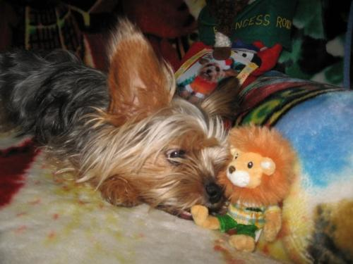 Gifts For Dogs - Canine Christmas Gifts. Mine Enjoying Hers.