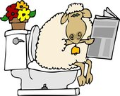 Sheep contemplating the news of the day - Sheep meditating on the news of the day!