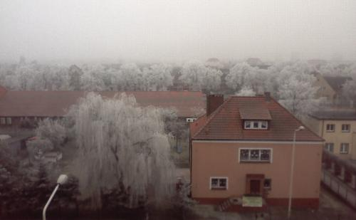 White trees. - These are the white trees which I saw when I got up today ;)