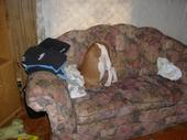 My crazy, funny dog! - I think his bone fell down between the cushions of the couch. My 6 year old stepson said he looked like the birds that stick their head in the ground! lol