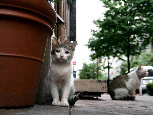 animals - Stray cats in college.