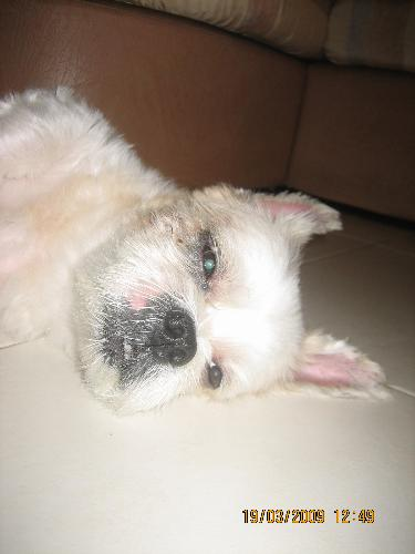 dog - my dog spent most of his time sleeping