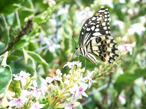 butterfly - its just a butterfly but it's my first butterfly picture