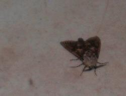 Wierd isn't it? - This is a picture of a moth