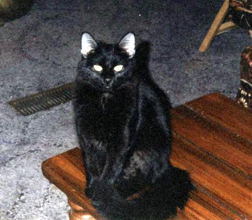 Picture of Screamer about there years ago! - This is my crazy Cat Screamer, taken when I still lived in my mobile home!