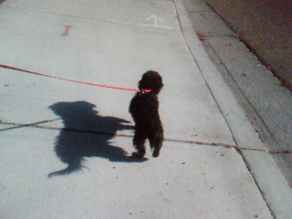 Marley walking  - Marley walking for discussion only