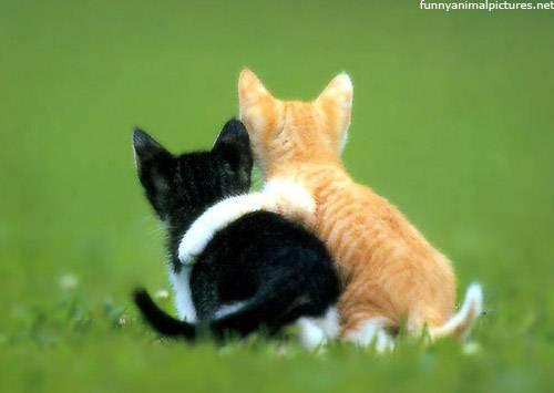 friends - cats friendship