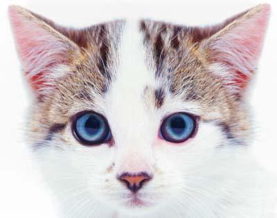 Cats... - Cats...