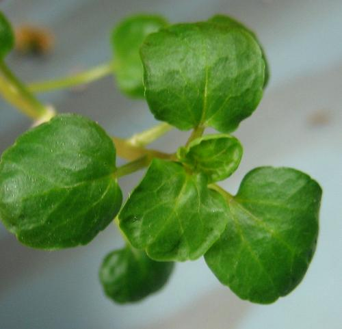 I Miss My Watercress - I didn't take my seed collections. I want to be growing more plants.