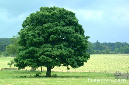 Green tree - Tree could only save us..
