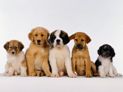 love dogs - I love dogs....