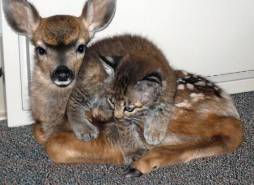 cub and fawn friends - from the fire cub and fawn friends