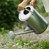 gardening - Gardening is an absorbing hobby which gives mental peace