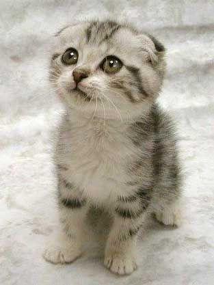 cute - kitten cute