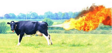 Cow's farts can be deadly - This picture describes just how much gas a cow has in its farts.