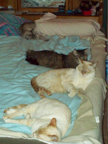 The line up - This is the line up of the four fiends in my life. Khuay, Willy, Dinglebeary and nestled in the pillows is Murphy, the little old lady.