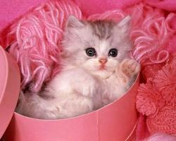sweety - My pet cat sweety.do u like her?
