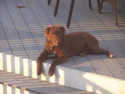 Rusty - Rusty on the deck