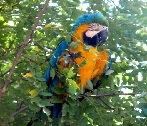 Parrot in a Tree - Isn't he beautiful?