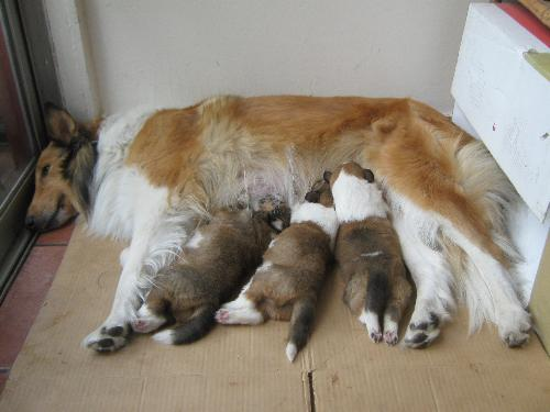 The family´s pets - This is Silka and her puppies.