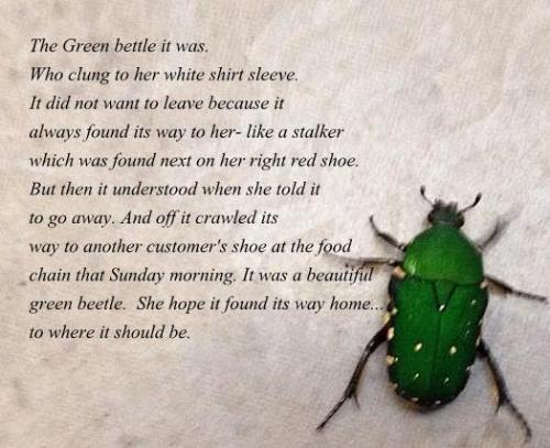 Green Beetle - a green beetle stuck on me haha