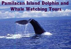 filipino dolphins - see and play with the Filipino Dolphins. They are so friendly to know...