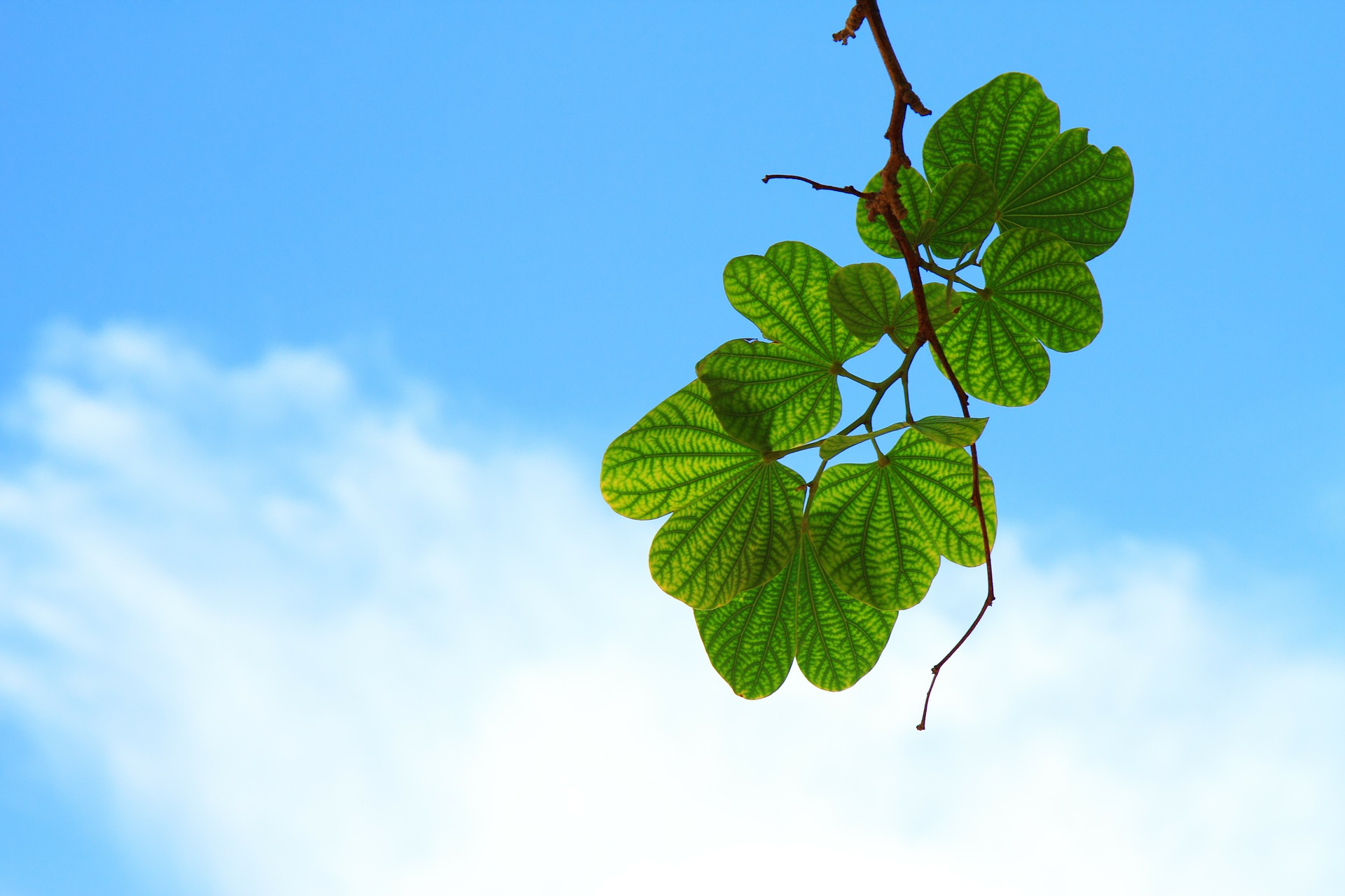 https://pixabay.com/en/leaves-twig-branch-sky-blue-cloud-15757/