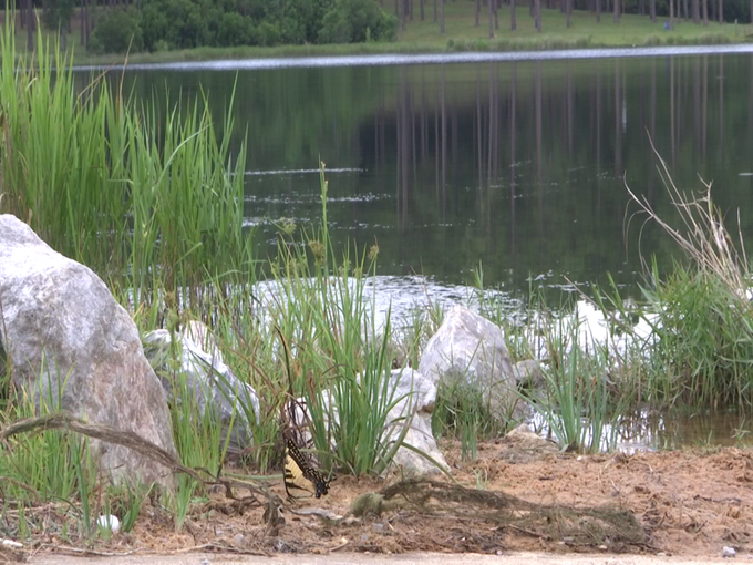 Cintronelle Lake in Alabama where five heroes saved a life of a stranger
