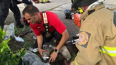 Firefighters in Winter Haven give a dog some emergency treatment