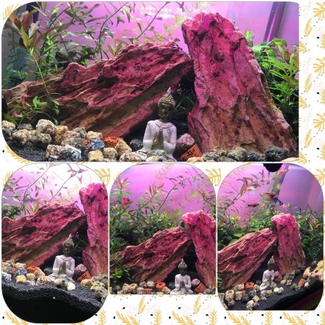 My new aquarium!