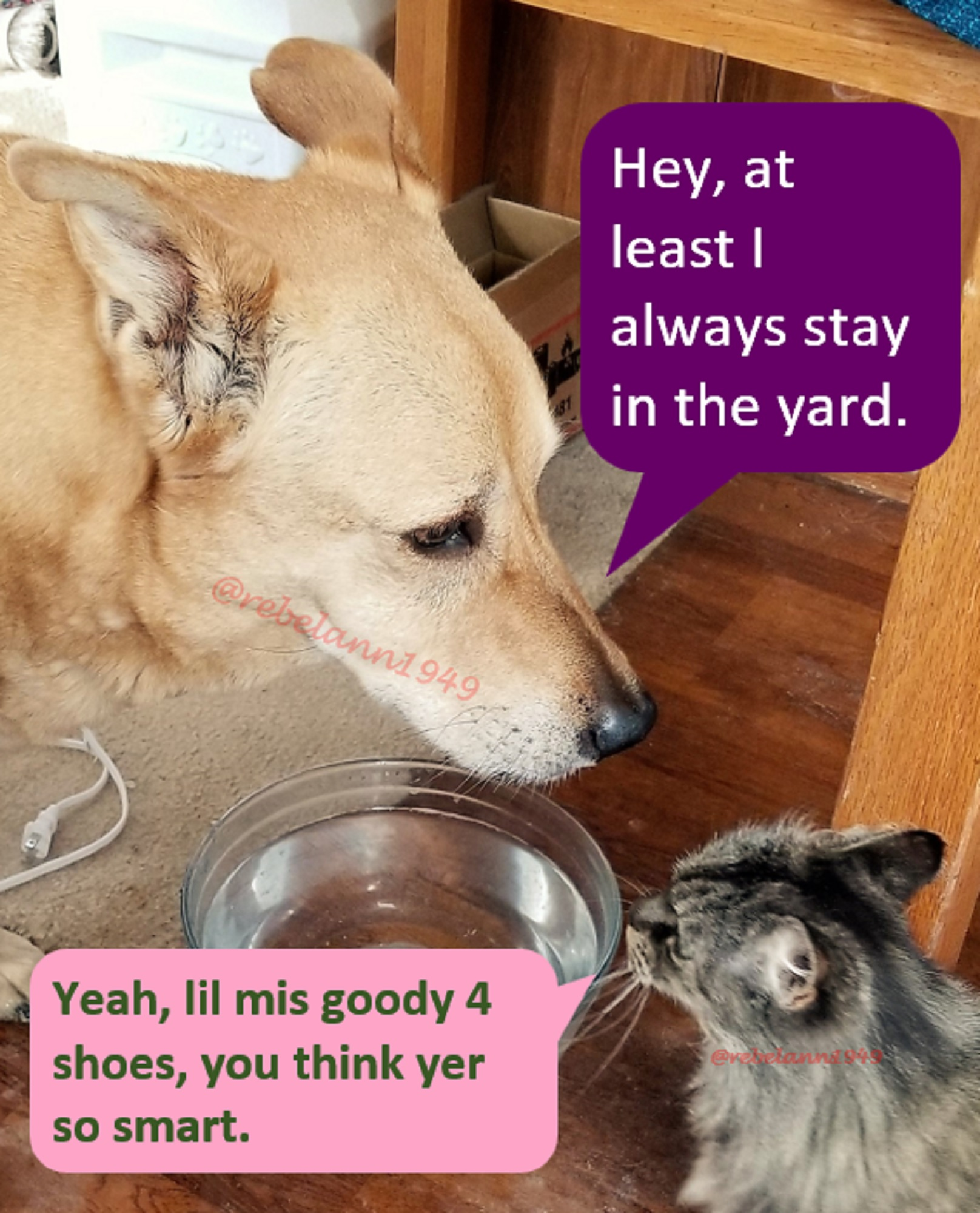 I took this shot on the 19th. It seems these two are always meeting at the water bowl.