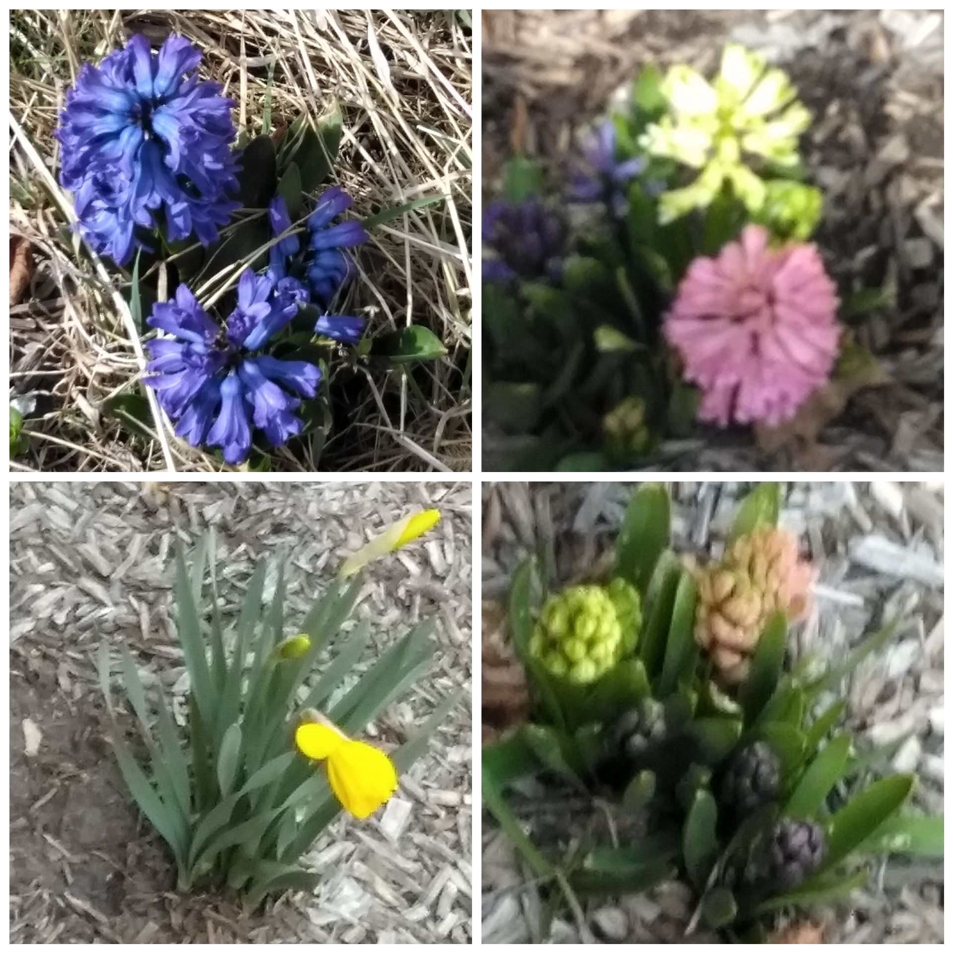 My spring flowers
