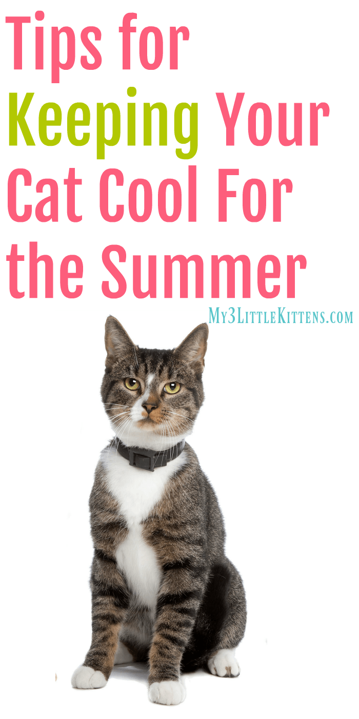 https://www.my3littlekittens.com/keeping-your-cat-cool/