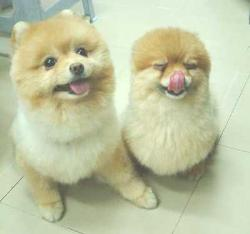 dogs - dogs