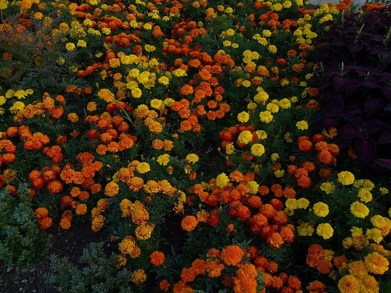 https://www.flickr.com/photos/blahflowers/9704679650