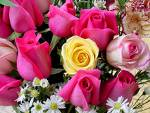 roses - bunch of flowers