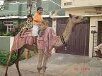 camel ride - Photographed at Mysore