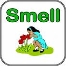 smell - smell