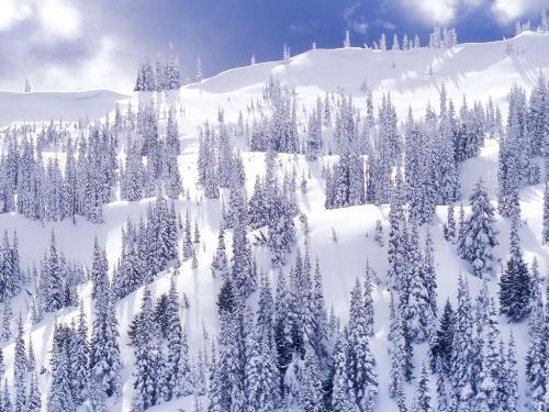 White Snow - White Snow