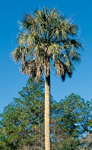 palm - palm