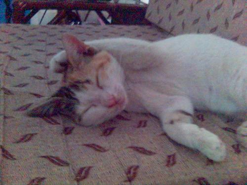MY CAT SLEEPING - SHE HAD THIS WEIRD POSTURE ONE DAY WHEN SHE WAS SELLPING,, HEHE,,