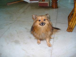 here my pet - how do u like him