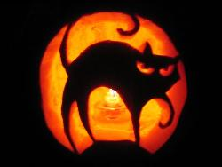 Pumpkin Carved - Pumpkin Carved With A Cat