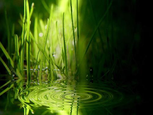 nature - nature