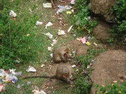Caring of Kids - This picture i took at one of the famoust place called YERCAUD,SALEM which is tamil nadu state ,India