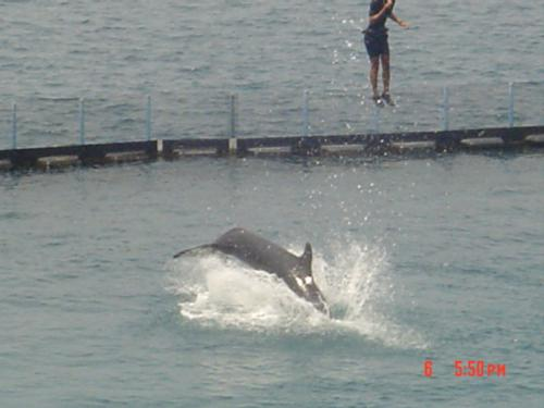 High flying dolphine - I love to see them again and again