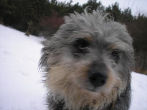 My dog! - A very good friend! :)
