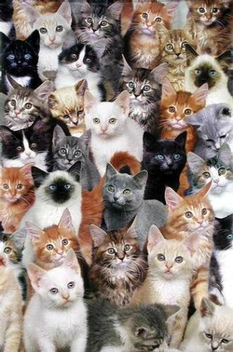 Which is your favorite cat? - cats