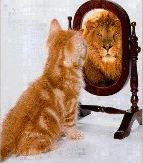 mirror - Cat looking in mirror and seeing a lion in reflection